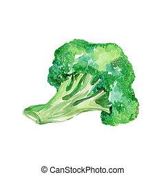 Broccoli - Watercolor Broccoli. Hand Drawn Illustration...