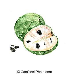 Annona - Watercolor Annona. Hand Drawn Illustration Organic...