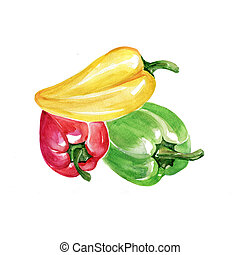 Bell Peppers - Watercolor Bell Peppers. Hand Drawn...