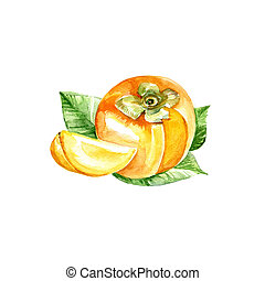 Persimmon - Watercolor Persimmon. Hand Drawn Illustration...