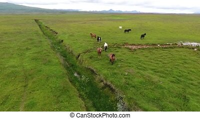 Panorama of pasture with horses in Iceland. Andreev.