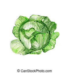 Cabbage - Watercolor Cabbage. Hand Drawn Illustration...