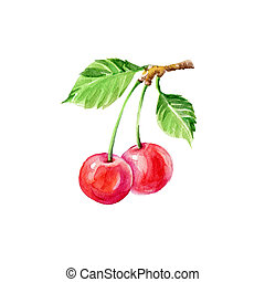 Cherries - Watercolor Cherries on Branch. Hand Drawn...