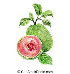 Guava - Watercolor Guava. Hand Drawn Illustration Organic...