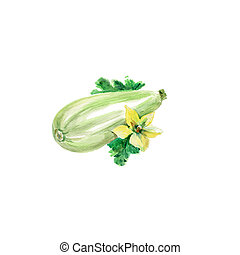 Marrow Squash - Watercolor Vegetables Marrow Squash. Hand...