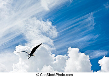 Beautiful blue sky with diagonal cloud formations and bird...