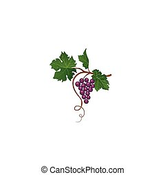 Grape bunch with leaves. Floral wine retro sign. Garden...