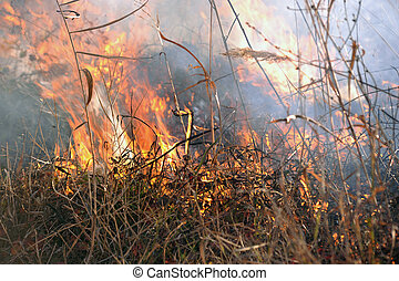 large grass fire2 - large grass fire in a low settlement