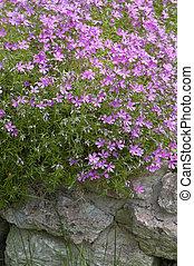 Well-groomed spring garden