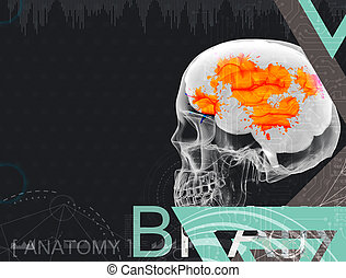 3d illustration of human brain by x- ray on background