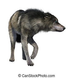 3D Illustration Gray Wolf on White - 3D rendering of a gray...
