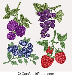 Hand drawn sketch berries. Set with blackberry, raspberry, currant and blueberry branch. Vector illustration vintage
