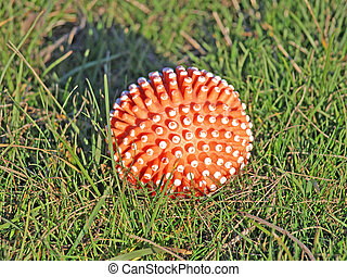 Red ball - Red ball on a green grass