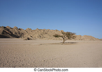 single tree in the desert