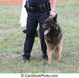 Police Dog - Police dog with human partner at demonstration