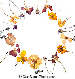 Frame made of yellow, red, violet dry flowers and petals on...
