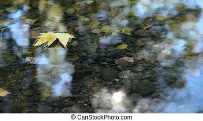 floating Fallen Leaf