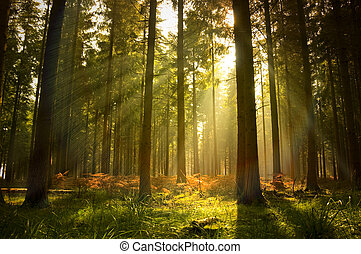 Beautiful Forest - A beautiful forest at dusk.