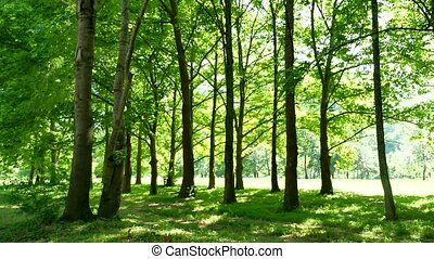 Beautiful green summer forest landscape nature. Forest and...
