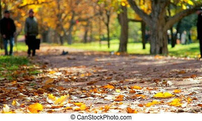 people in the autumn park - People are walking in autumn...