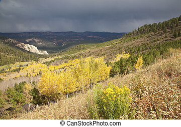 a passing storm brings out the colors in Dixie National Forest