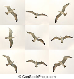 flying seagulls - set of different flying seagulls