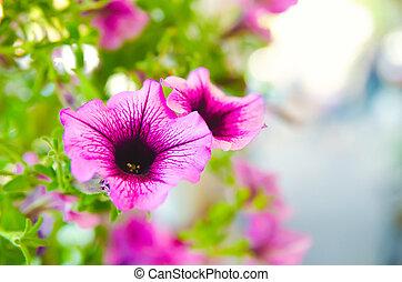 purple flowers - blooming purple flowers in the garden