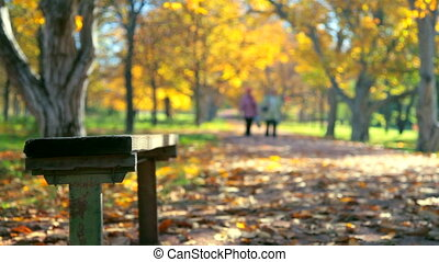 autumn park - bench in autumn park