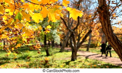 autumn park - yellow leaves in autumn park