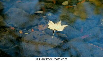 Fallen Leaf - Fallen leaf floating on water