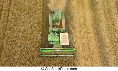 Aerial view combine harvester gathers the wheat at sunset....