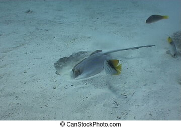 sting ray underwater video - underwater video