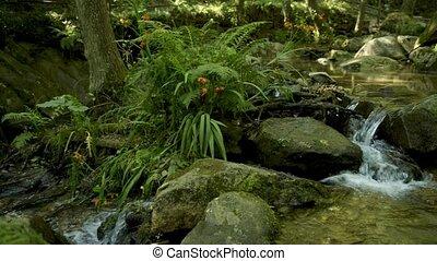 Natural vegetation in Cabreia Portugal - Natural vegetation...