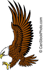 calvo, águia, vetorial