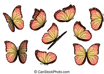 Set colorful isolated butterflies. View Insects Lepidoptera...