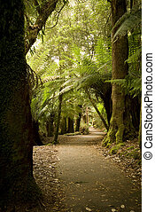 Forest Pathway - Pathway through lush ferns and forest...