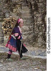 Drudgery of wood - Hmong flowered woman returning from the...