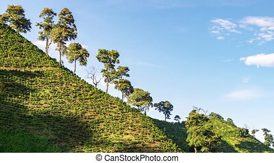 Time Lapse of a Coffee Farm - Time lapse zooming out with a...