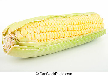 ear of corn - isolated ear of corn