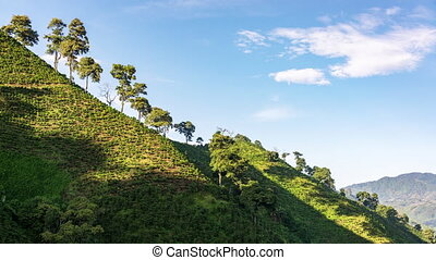 Coffee Landscape Time Lapse - Time lapse of beautiful hills...