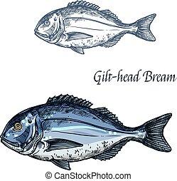 Gilt-head bream fish vector isolated sketch icon - Bream...