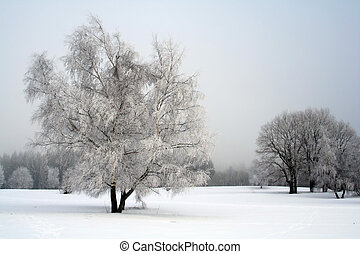 snow landscape with trees  - snow landscape with trees