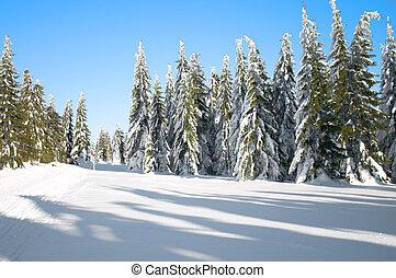 Winter, landscape, naaldbomen