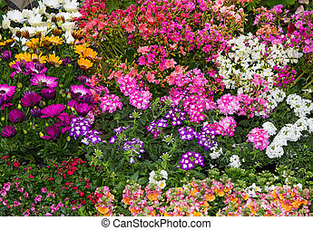 A colorful flowerbed with vibrant perennial plants.