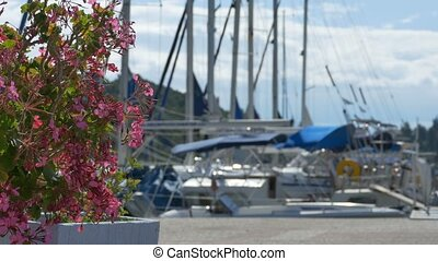 Boats and Flowers in the Harbor