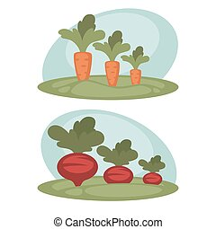 Carrot and beet growing - Vector illustration of carrot and...