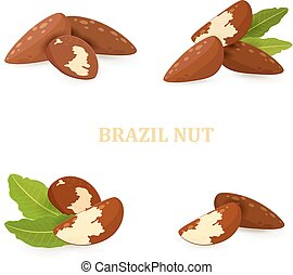 collection groups of brazil nuts for your design