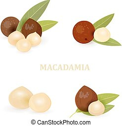 collection groups of macadamia with leaves for your design