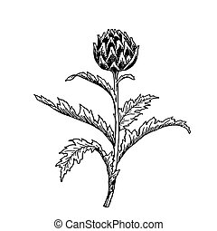 Detailed sketch of a plant clover