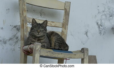 Cat Laying on Chair - Cat sitting on a wooden chair near a...